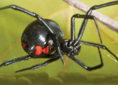 Spider Control in & near Moreno Valley & Riverside, CA