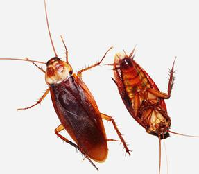Roach Exterminator in & near Moreno Valley and Riverside , CA