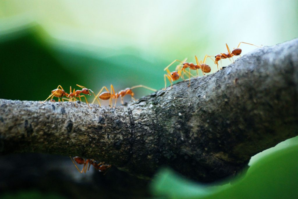 Ant Exterminator in & near Moreno Valley, CA