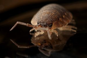 Quarterly Pest Control Service in & near Riverside & Moreno Valley, CA