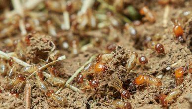 Riverside-Termites-Control