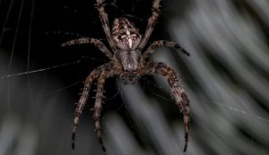Spider-Control-in-and-near-Moreno-Valley