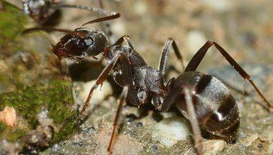 Ant Control in & near Moreno Valley, CA