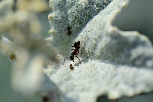 Ant Control in & near Moreno Valley, California