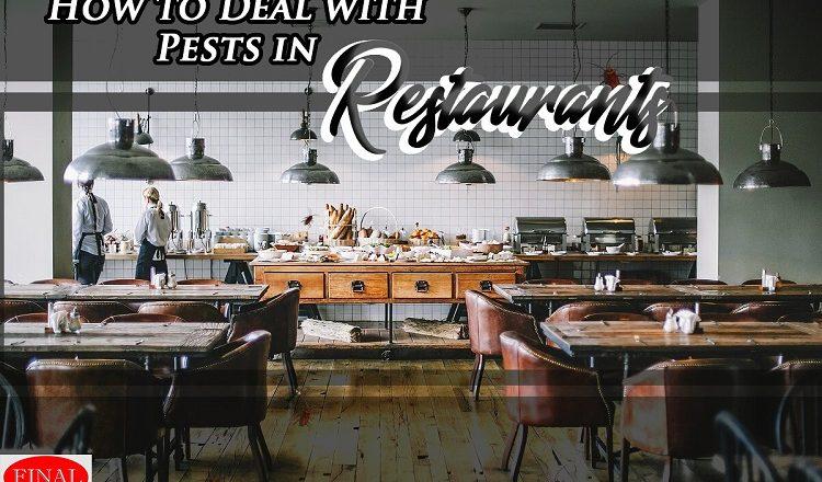 Restaurant Pest Control in Moreno Valley CA